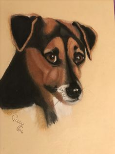 Pastel pencil drawing of Jack Russell