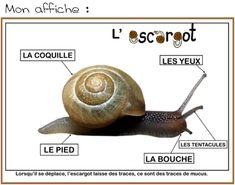Notre étude sur les escargots - Payette Family