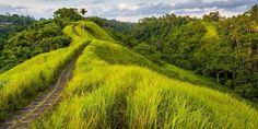 Beautiful hills in Ubud, Bali