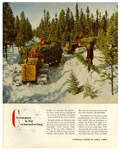 christmas tree farm flickr photo sharing - How Many Christmas Trees Per Acre