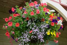 Tips for Growing Hanging Baskets: Best plants for hanging flower baskets   Hanging flower basket DIY