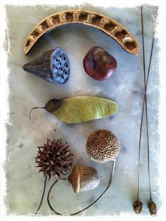 natural collections