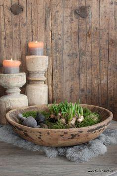 Bulbs moss old bowl