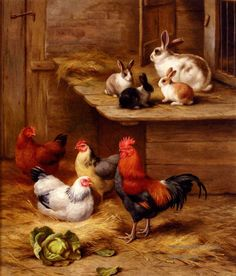 5 Farmyard Neighbours farm animals - bunnies and chickens  Edgar Hunt
