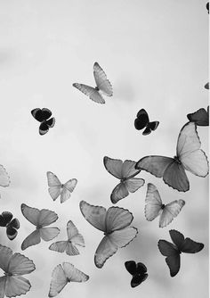 There is something about the delicacy of a butterfly that captivates the eyes and awakens the heart to appreciate the beauty of life.