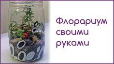 Сделать флорариум своими руками совсем несложно. Нужно лишь подобрать удобный стеклянный сосуд, выбрать мелкие, медленнорастущие интересные растения, запасти...