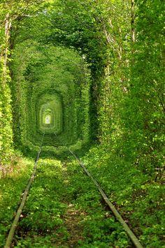 overgrown on railroad track