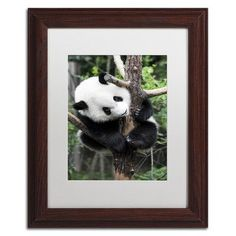 """Trademark Art """"Giant Panda IV"""" by Philippe Hugonnard Framed Photographic Print Matte Color: White, Size: 20"""" H x 16"""" W x 0.5"""" D"""
