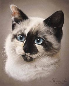 SOUKY Pastel - Commande - Commission Infos et tarifs des commandes / Order information and prices : Mail : contact SOUKY by Skyzune ART Pastel Portraits, Pet Portraits, Animal Paintings, Animal Drawings, Artist Painting, Painting & Drawing, Warrior Cats, Cute Cats And Kittens, Watercolor Animals