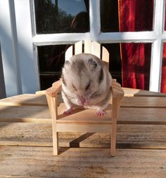 Hamster chair! CUTE! [Haha]