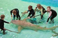 The Australian Shark and Ray Centre Shark, Sydney, Centre, Photos, Painting, Image, Painting Art, Sharks, Paintings