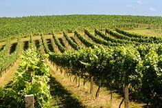Bento Gonçalves - wine country - Brazil
