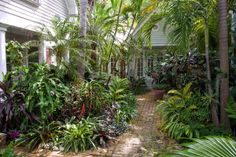 lush tropical gardens - Google Search