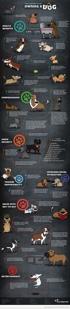 The Benfits Of Owning A Dog