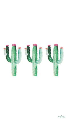 handdrawn cactuses I screensaver I iPhone wallpapers I phone backgrounds I summer themes