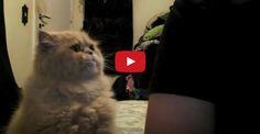 The Very Needy Cat