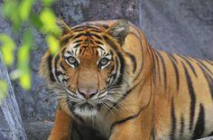 jungle animals - Google Search