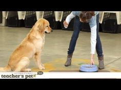 How To Get Your Dog's Attention: 3 Easy And Fun Exercises – Kaufmann's Puppy Training Site