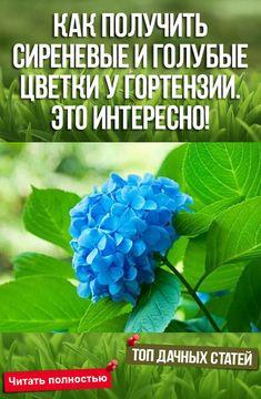 Rockery Garden, Garden Paths, Organic Gardening, Gardening Tips, Types Of Houseplants, Small Farm, Tropical Garden, Flower Beds, House Plants