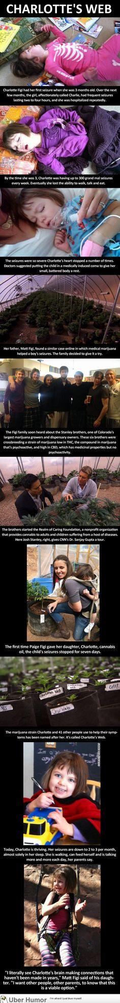 Heartwarming Medical Pot Story - http://geekstumbles.com/funny/uber-humor/heartwarming-medical-pot-story/