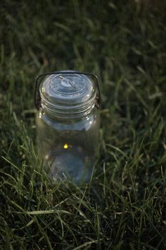 Firefly in a jar by Laura Sellers Photography-Flies On The Butter