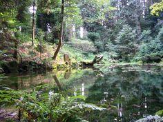 赤蔵山憩いの森「御手洗池(みたらし池)」(住所:石川県七尾市三引町154-9-1)|自然人ネット