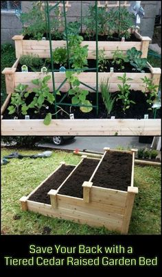 Enjoy gardening without breaking your back with this tiered cedar raised garden bed! Enjoy gardening without breaking your back with this tiered cedar raised garden bed! Cedar Raised Garden Beds, Cedar Garden, Raised Vegetable Gardens, Vegetable Garden Design, Raised Beds, Vegetable Gardening, Organic Gardening, Raised Gardens, Raised Herb Garden