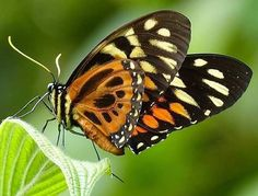 Good evening #butterflies #butterfly #flowermagic #flowerstagram #flowerpower #nature #natureza #naturephotography #inspiration #pic #photo #photography #photographer #photoshoot #beautiful #awesome #stunning