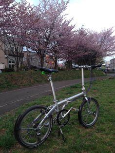 Copyright © エルチリ 様 / route 2012 / 札幌にもようやく桜が咲きました。輪行に大活躍のルートで1枚。