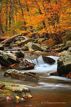 Cunningham Falls State Park. Deep in the Catoctin Mountains of Frederick County, alongside the presidential retreat Camp David, rests Cunningham Falls State Park and its namesake waterfall.