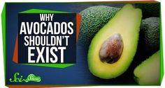 This is Why Avocados Shouldn't Exist