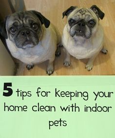 5 tips for maintaining a clean house with indoor pets - and dogs that shed