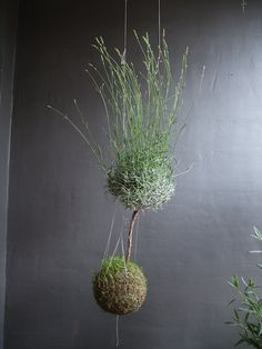 PS: What's the most challenging part about creating a string garden?  FV: I think the most challenging part is to create the right conditions inside the ball. I want it to be perfect since I can't control the conditions in the environment my customers take them to. I feel responsible if it would fail to survive so I often advise people to buy less challenging plants. It's hard to let go.
