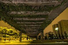 Paso elevado. Jerez. Foto: Salvador Moreno #photo  #Nocturna
