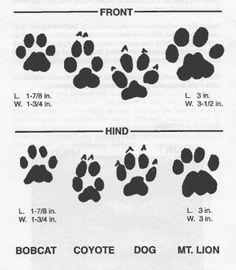 Animal tracks identification