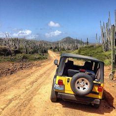 Caribbean Photo of the Week: Going Off Road in Bonaire