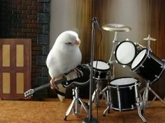 A very talented budgie.
