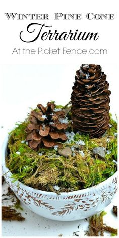 Winter Pine Cone Terrarium from atthepicketfence.com