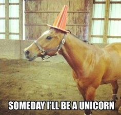 Funny Horse Quotes Tumblr — Love Quotes Image