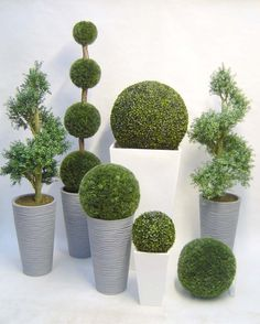 1000 images about potted plants on pinterest topiaries - Outdoor plants for front door ...