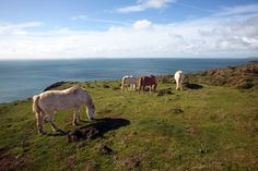 Wales Coastal Path, Draft Horses, Paths, Animals, Animales, Animaux, Animal, Animais