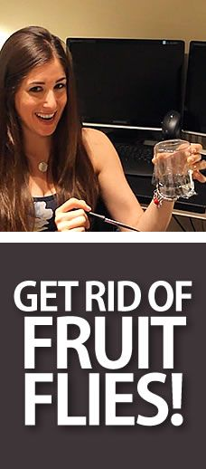 A Quick & Easy Way to Get Rid of Fruit Flies!