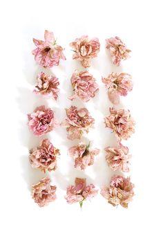 bush roses   STILL (mary jo hoffman)