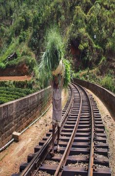 9 Arch Bridge in situated in the green hill town of Ella in Sri Lanka. How to get to 9 Arch Bridge, 9 Arch Bridge price and best time to visit 9 Arch Bridge Arch Bridge, Sri Lanka, Railroad Tracks, World, Bridges, Train Tracks