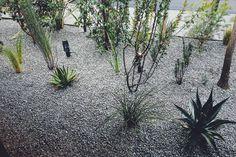 みつわクリニック:TREEFORTE Landscape Design work Landscape Design, Plants, Landscape Designs, Planters, Plant, Planting, Landscaping