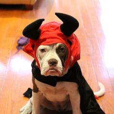 Pet Halloween Costume Tips