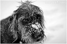 "Photo by Ross Rippy and roostersnaps.com Please search and ""LIKE"" Rooster Snaps on facebook! My dog Tuck! Great pup!  #dog #photography #blackandwhite"