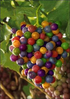 grapes, freaky