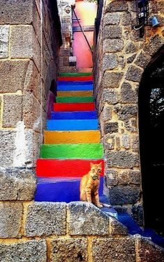 Greece Travel Inspiration - Colorful Stairs in Rhodes Island, Greece (by Wonderful Greece) > the cat adds the right amount of realism ...