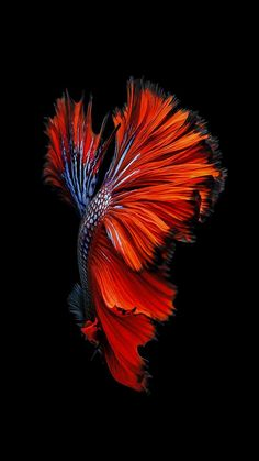 Wallpaper Dump 1080x1920. Live Fish WallpaperLive Wallpaper Iphone ...